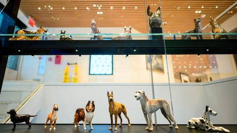 Dog days at revived New York museum