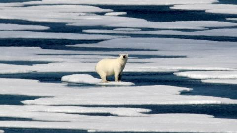 Russian Arctic archipelago sounds alarm over aggressive polar bears