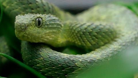 How to avoid snakebites