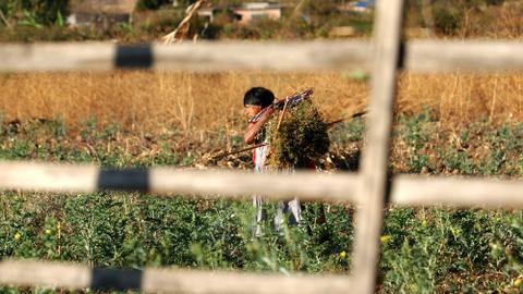Medicinal plants used in traditional remedies under threat in Mexico