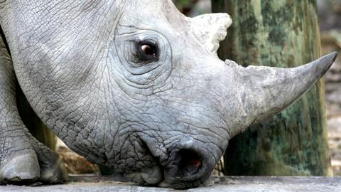 Rhino poacher crushed by elephant, devoured by lions in South Africa