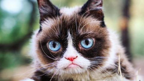 Internet star Grumpy Cat dies at age of seven