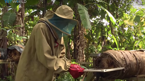 Ugandan farmers tap into growing demand for bee venom
