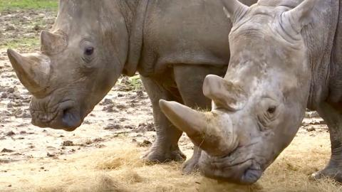 European zoos tighten security after poachers kill rhino in France