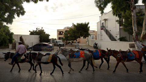 Animal rights group says Greece covering up Santorini donkey 'abuse'