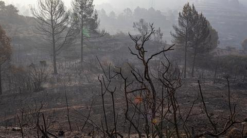Forest fires rage in Spain's Catalonia