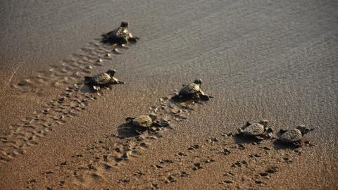 About 70,000 baby turtles to hatch on Turkey's Antalya beach