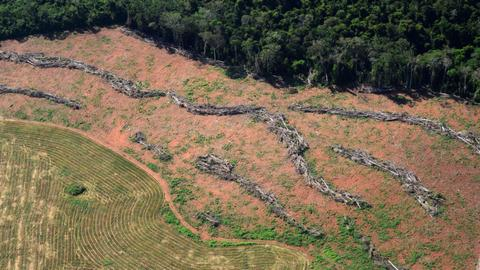 Brazil authorises national security force to fight deforestation