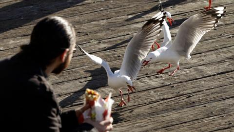 Staring at seagulls can stop them stealing food, study suggests
