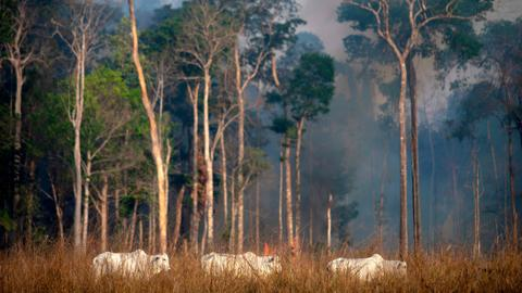 Brazil military fights Amazon fires as G7 leaders agree to send urgent help