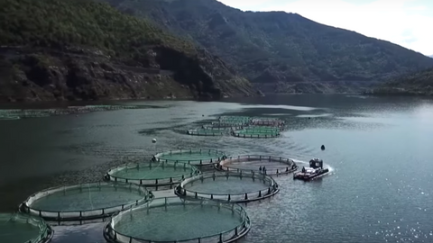 Turkish entrepreneur opens salmon farm in Rize