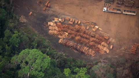 Amazon illegal loggers have Bolsonaro's 'green light' – HRW