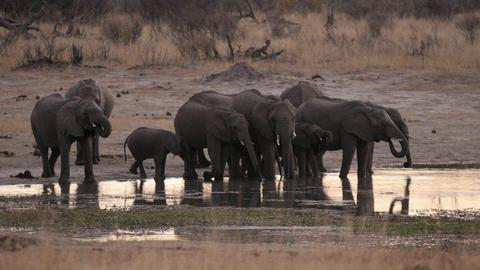 Zimbabwe says 55 elephants die from starvation after drought