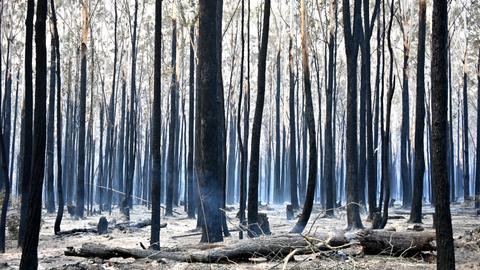 Australia's east coast faces 'catastrophic' bushfire threat
