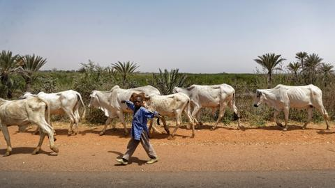 Nigeria cattle gang launches deadly attack – police