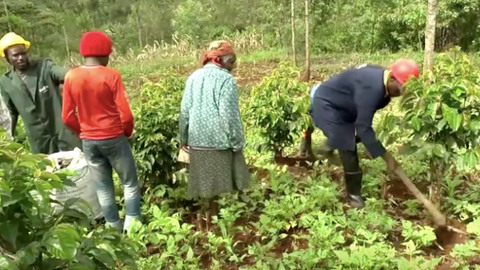 Ex-convicts in Kenya turn to agriculture for new lease of life