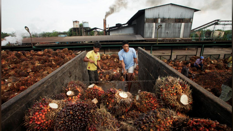 Indonesia hits EU with WTO lawsuit over palm oil