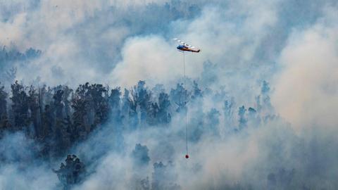 Australia states declare emergencies amid massive bushfires