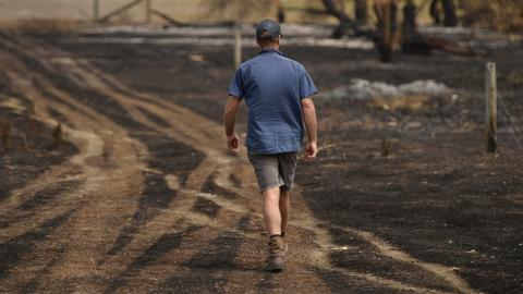 Australia's farmers count cost after bushfires wipe out livestock