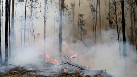 Floods, road closures in Australia as storms lash bushfire-hit regions