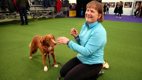 Hundreds of dogs dash for Westminster agility title