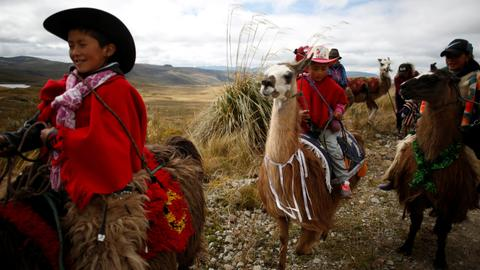 Ecuador children race llamas to save wetland park