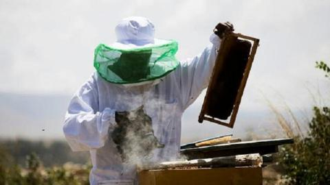 Ethiopia seeks to boost honey production