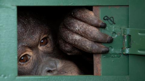 China considers 'complete ban' on wildlife trade as coronavirus spreads