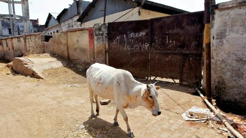 Government ban imperils India's meat and leather industries