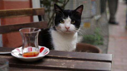 Hit film about Istanbul's cats finally comes home to Turkey