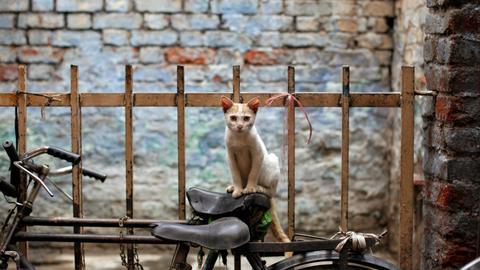 'CATastrophe' averted as India court rules on virus lockdown