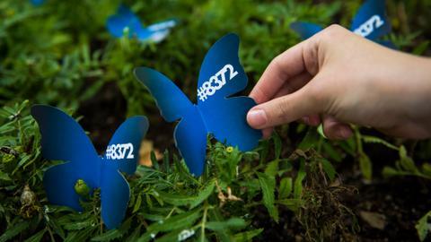 Did blue butterflies help unearth mass graves in Bosnia?