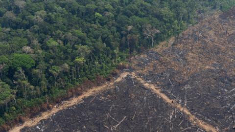 Brazil's Amazon fires surge as climate change fears loom - TRT World