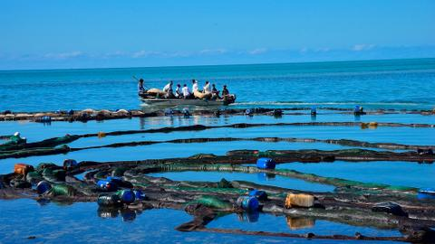 Oil spill heavily damages Mauritius' coral reefs