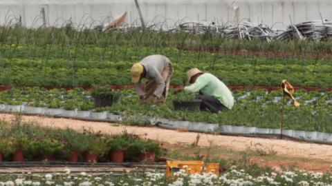 New law aims to give more rights to migrant workers in Greece