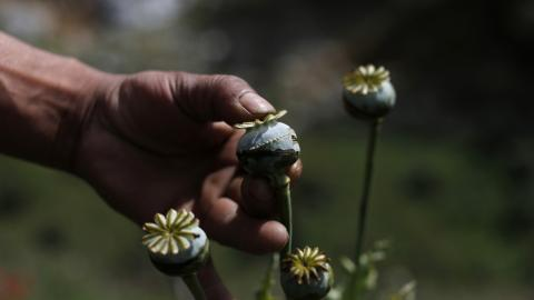Violence over opium crops plagues Mexico's Guerrero state