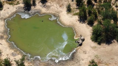 Botswana: Bacteria poisoning killed more than 300 elephants