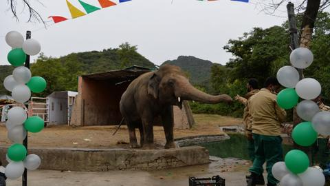 Pakistan's lonely elephant Kaavan set to leave for Cambodia