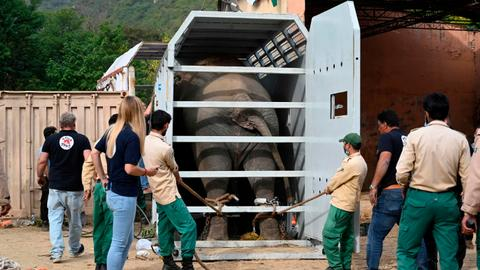 'World's loneliest elephant' Kaavan heads to Cambodia after Cher campaign