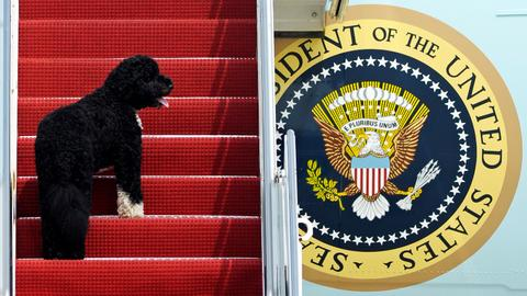 Pets poised for return to the White House after Biden's win