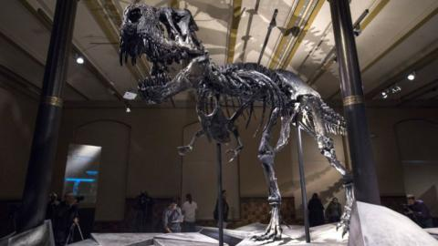 Newly discovered skull gives insight into dinosaur biology