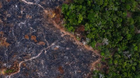 Can the pandemic be a trigger to stop deforestation once and for all?