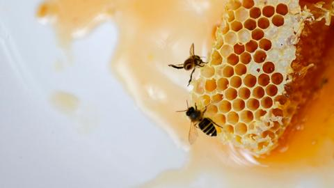 All-natural Covid-19 vaccine made from honeycombs shows promising results