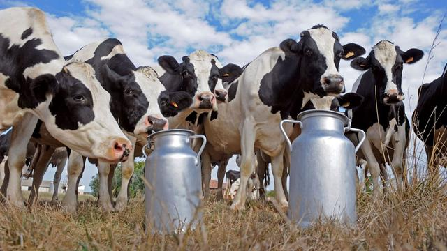 dairy sector of pakistan Utilised for managing dairy animals in pakistan, like many other countries of the world, the most useful and efficient way of converting crop residues and agro-industrial byproducts into high quality food is milk production, keeping in mind the potential of pakistani buffalo there are many issues that dairy sector is currently facing.