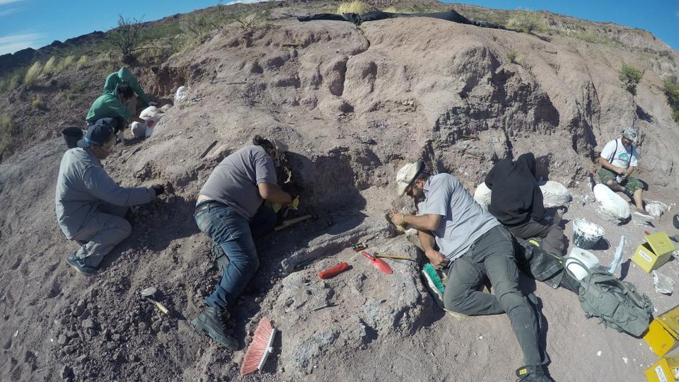 Paleontólogos excavan huesos de dinosaurios pertenecientes a titanosaurios en el condado de Neuquén, Argentina, 19 de febrero de 2017.