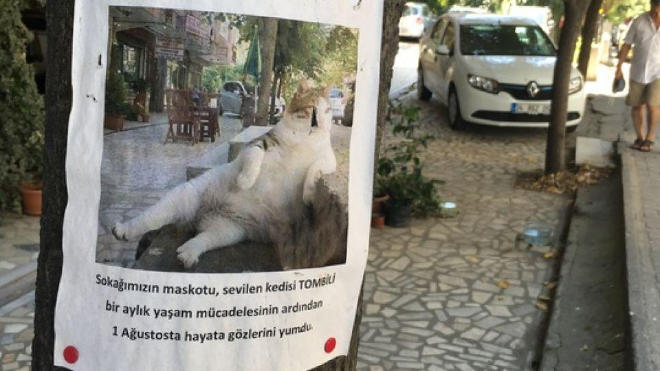 Tombili became a social media sensation after someone posted a photograph online of her reclining on the stairs. Her death was announced on posters pinned on a tree where the famous picture was taken and prompted a successful petition for her statue.