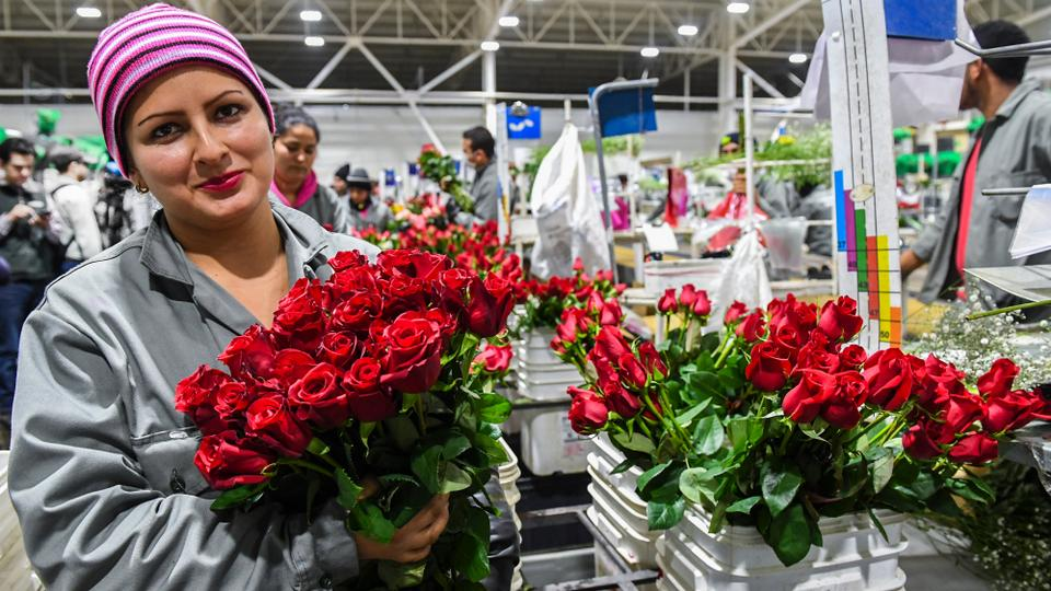 Valentine\'s Day a rosy opportunity for jobless Colombians