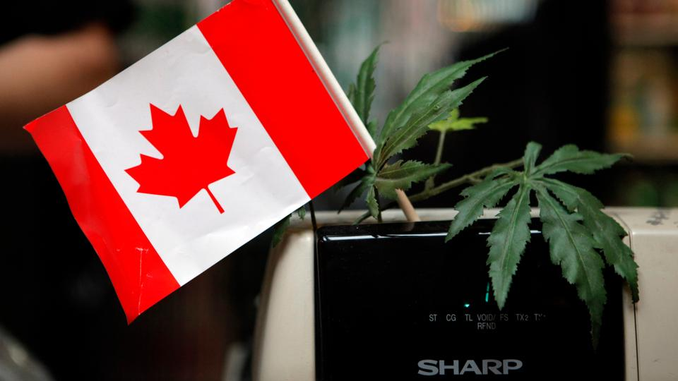 Canada last month became the second country in the world to legalise the use of cannabis for recreational reasons, but the legislation strictly prohibits the sale of edible cannabis until the next year.