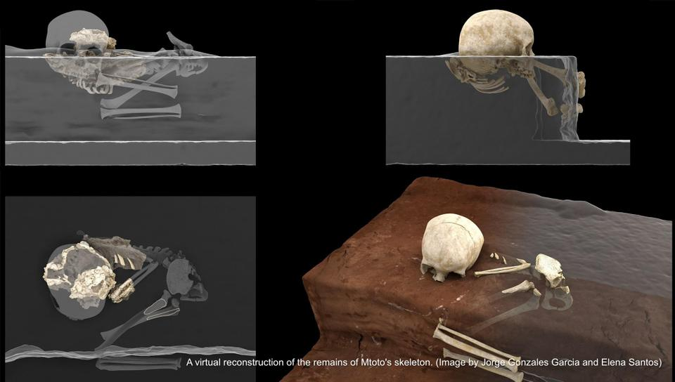 Virtual reconstruction of the Panga ya Saidi hominin remains at the site (left) and ideal reconstruction of the child's original position at the moment of finding (right).
