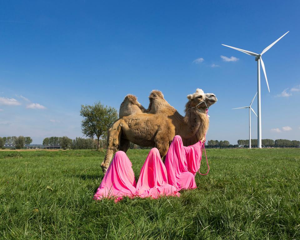 Scarlett Hooft, Still Life with Camel, 2016.